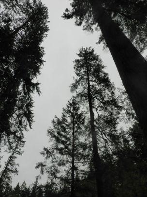 low angle trees