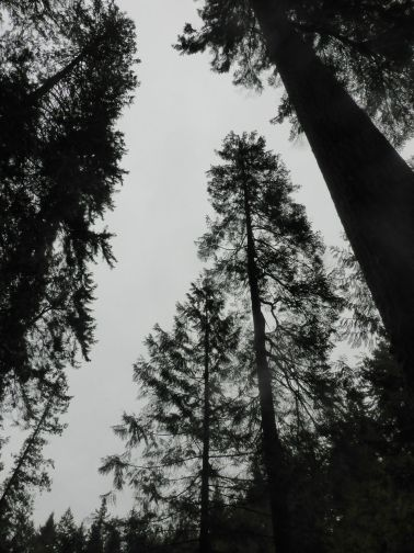 low angle trees