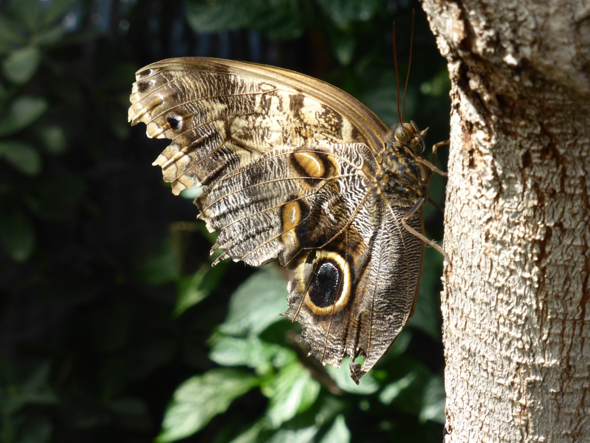 earth-toned butterfly