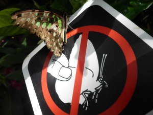 don't handle the butterflies