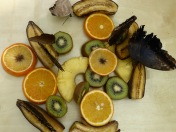 butterflies eating bananas, kiwis, pineapple & oranges