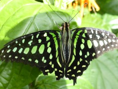 black and neon green butterfly