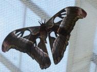 earth tones butterfly