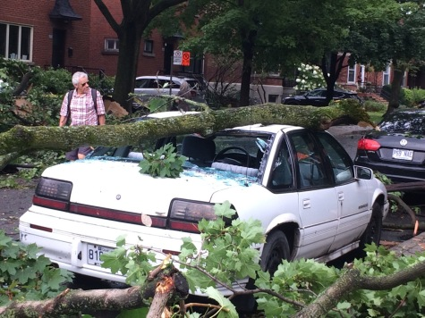 fallen tree on car with smashed window