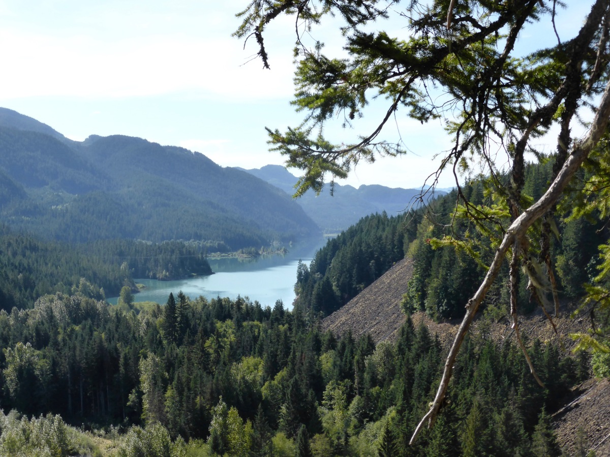 Landscape with turquoise lake and pine trees