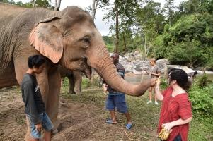 kp feeding elephant bananas