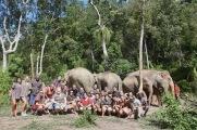 group with elephants