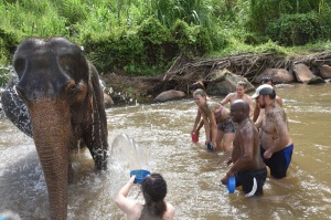 mudbath with elephants