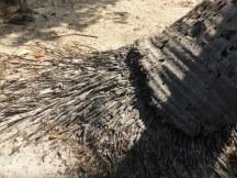 banyan-tree roots