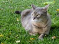 Odin (cat) in the grass