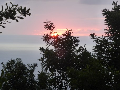 sunset with greenery in foreground