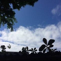 roof greens