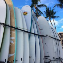 surfs up - surfboards in a row
