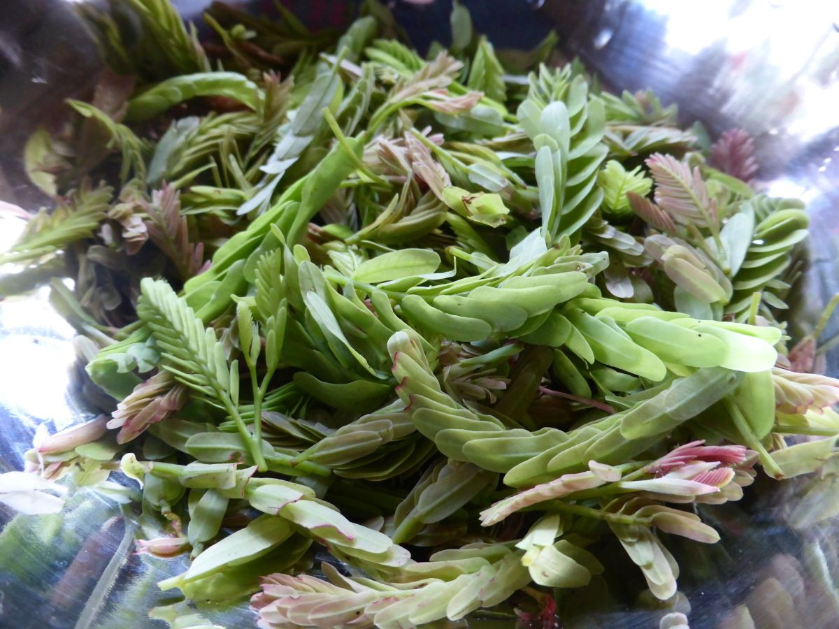 tamarind leaves