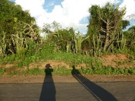 Bagan - Long shadows and cactus