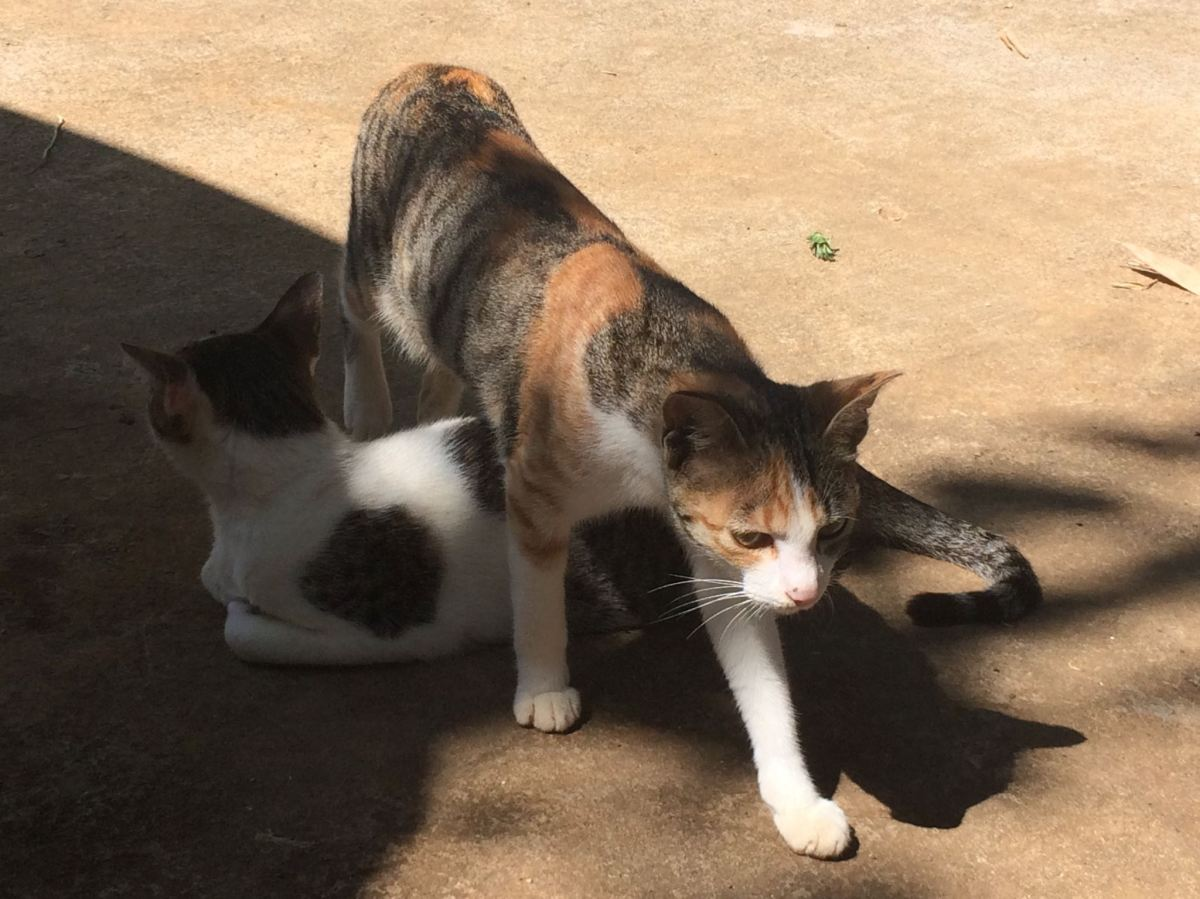 cat walking over lying-down cat