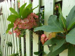 flowers peeking through picket fence