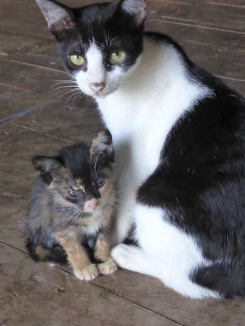 momma cat with kitten