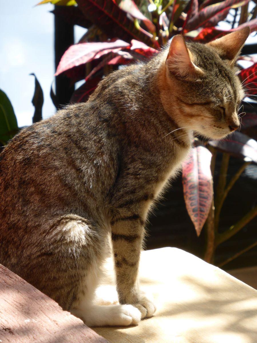 cat squinting in sunlight