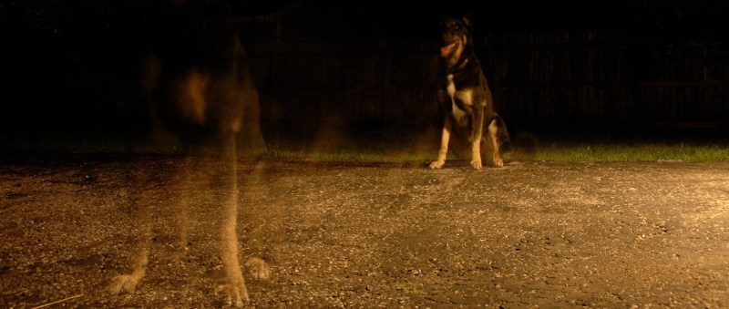 German shepherd sitting on grass in the dark with a superimposed image