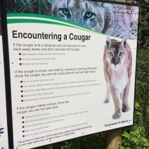 "sign: ""Encountering a cougar"" - with tips for what to do"