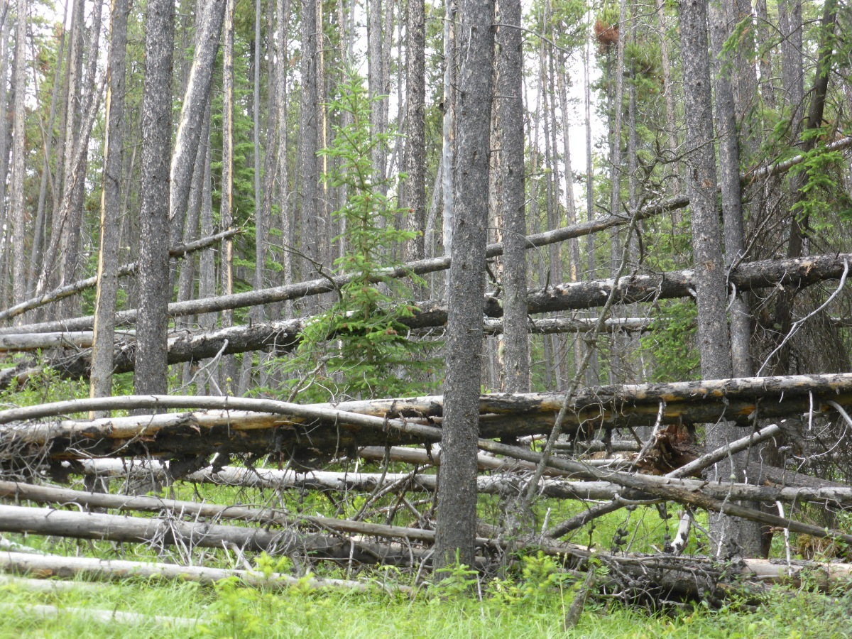 vertical and horizontal tree trunks