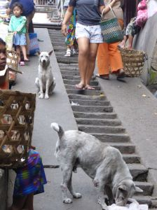 dogs on concrete steps