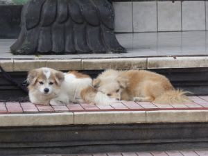 two dogs lying down