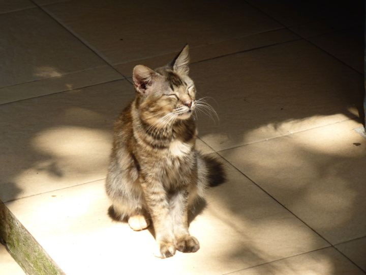 Tabby basking in the sun