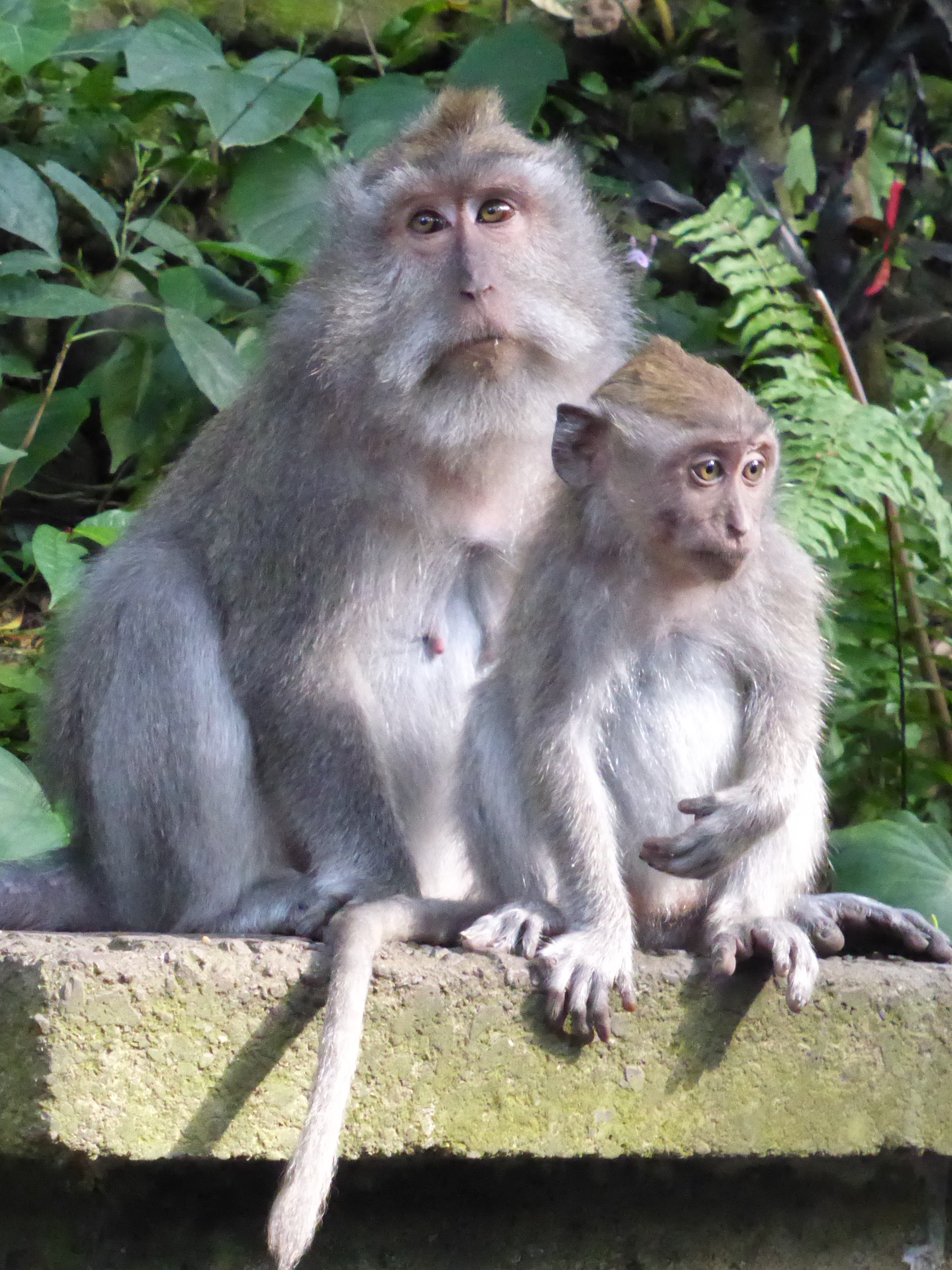 parent and child monkey