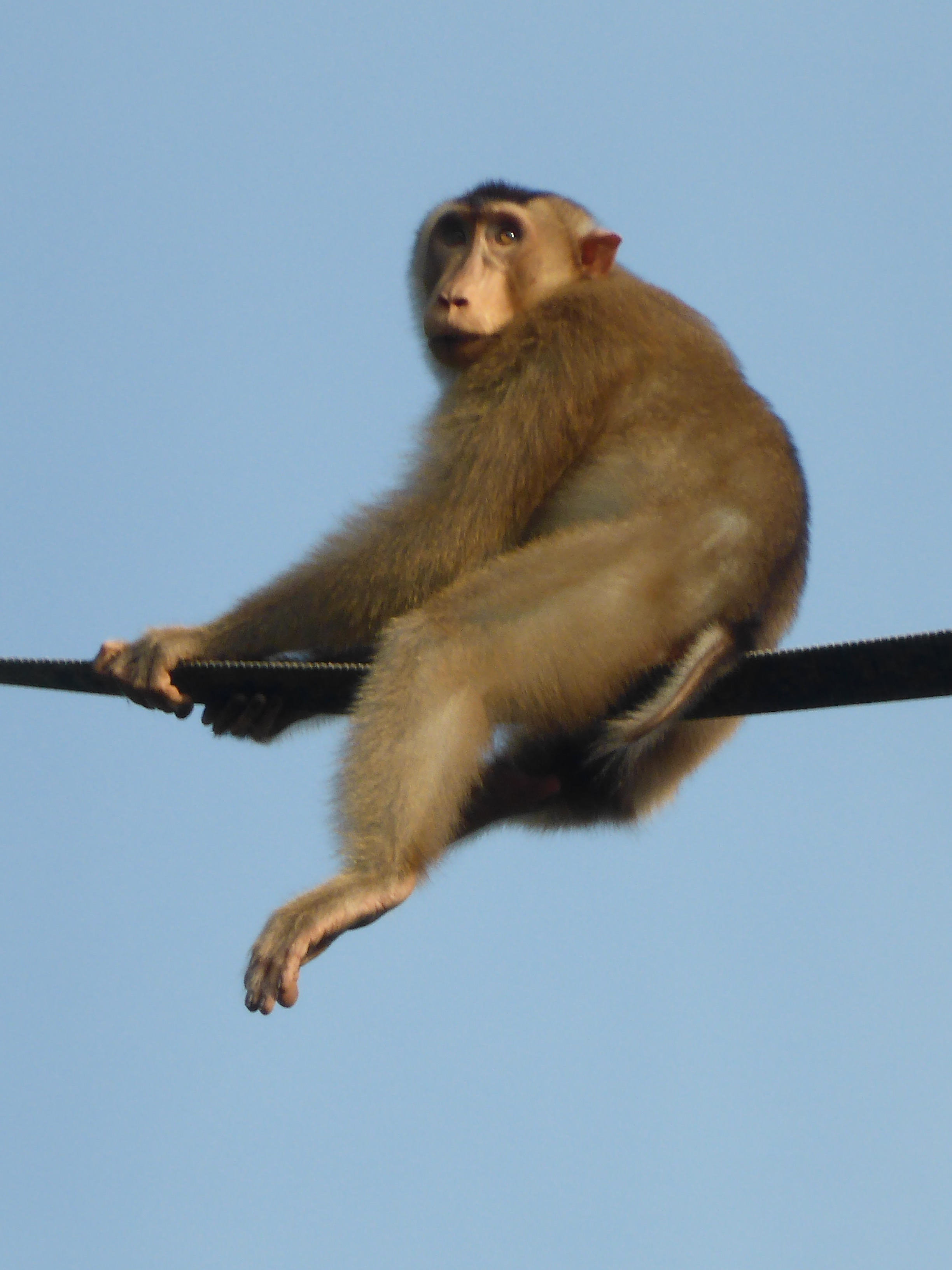 monkey sitting on rope bridge
